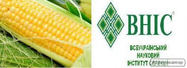 Nasiona kukurydzy, gibrid gran 5
