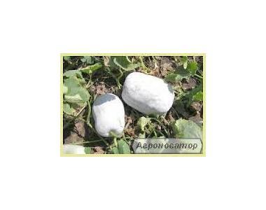 Nasiona bobów