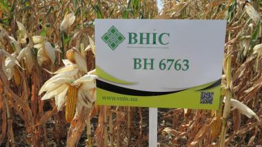 Nasiona kukurydzy, gibrid p9400