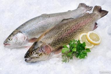 Ryby świeżo mrożone pstrąg