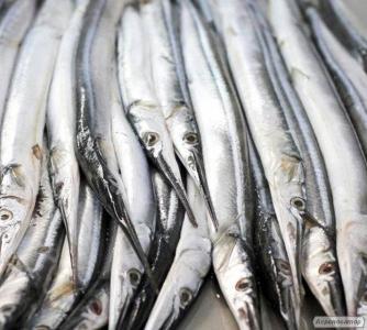 Ryby świeżo mrożone sardynka