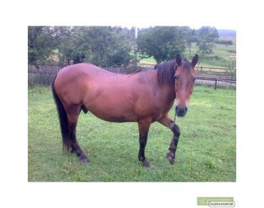 Skóra końska