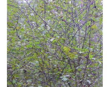 Sadzenie drzew i krzewów