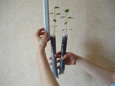 Nasiona drzew