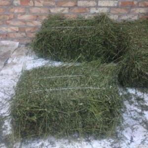 Siano łąkowe