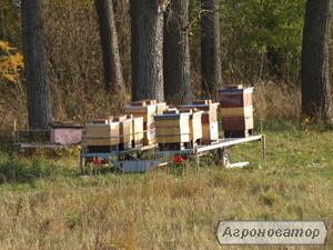 Rodziny pszczele 10 ramkowe