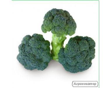 Nasiona kapusty brokuły