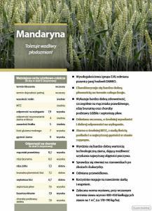 Kwalifikowane nasiona siewne pszenicy jarej Mandaryna C/1