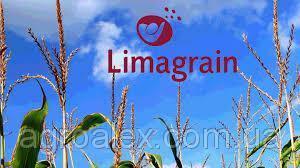 Nasiona kukurydzy, gibrid lyuvena