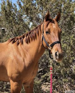 gentle quarter horse