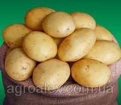 Sadzeniaki ziemniaków, erou
