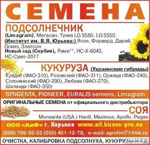 Nasiona słonecznika, gibrid tunka