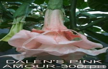 Sadzonki krzewów dekoracyjnych