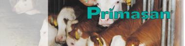 Primasan-Dla jałówek i opasów-25kg