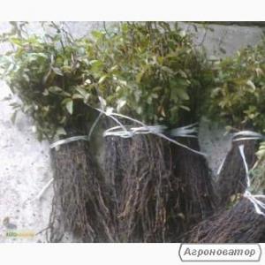 Podkładki dla drzew