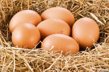 jaja sciolkowe