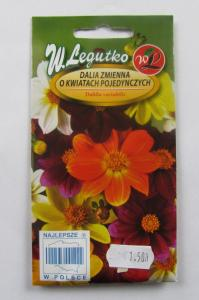 Dalia zmienna o kwiatach pojedynczych W.Legutko