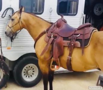 Buckskin čtvrtletí kůň valach