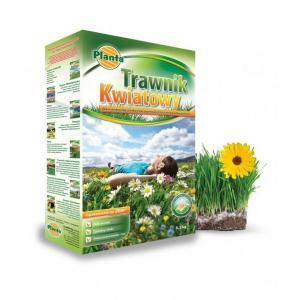Trawa TRAWNIK KWIATOWY kwiaty polne PLANTA 0,5kg