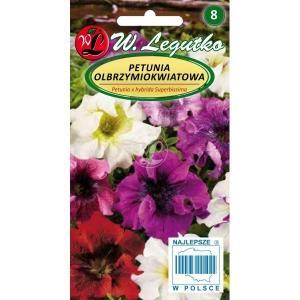 Petunia olbrzymoikwiatowa Superbissima Mix LEGUTKO