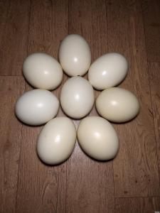 Strusie jaja