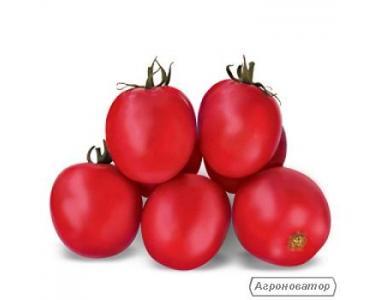 Nasiona pomidorów, aysha F1