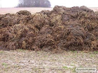 Kompost fekaliowo–torfowy