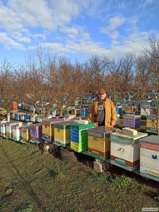 Rodziny pszczele  Kraińska