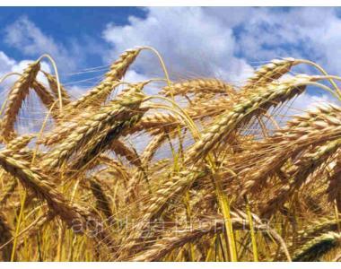 Regulatory wzrostu i rozwoju roślin
