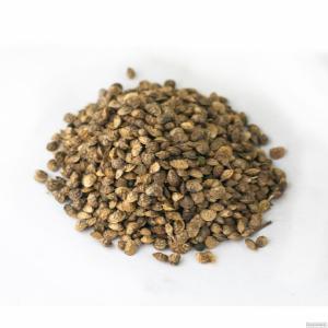 Nasiona sparcety, ametist doneckiy