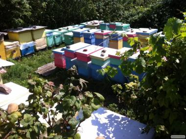 Pakiety pszczele  Karnika