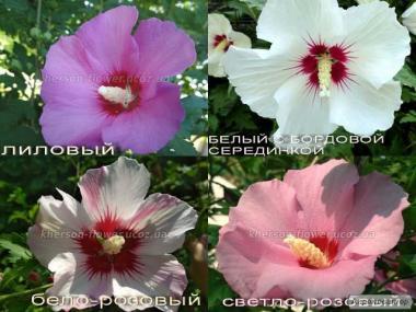 Pokojowe kwiaty i rośliny