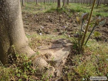 Drzewo tlenowe OXYTREE – Idealny wybór