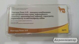 Szczepionki profilaktyczne dla psów