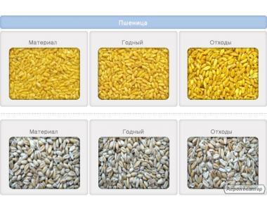 Czyszczenie nasion i zbóż oczyszczanie nasion gorczycy