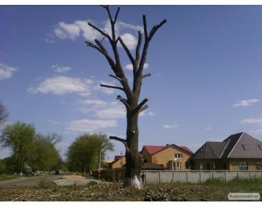 Pielęgnacja drzew i krzewów