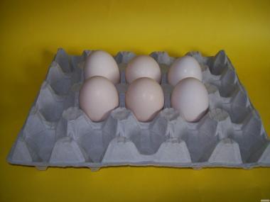 Jaja kurze jajka. Dla hurtowników i sieci sklepów.. Dostawa gratis.