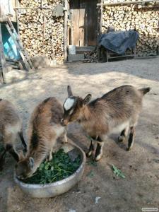 Kozy  inna
