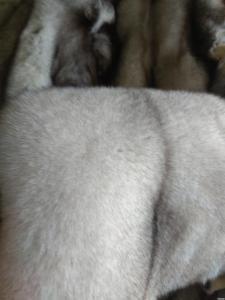 Futro z lisa polarnego
