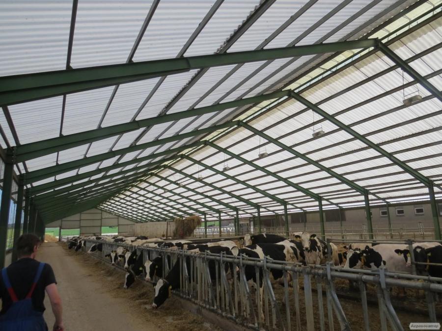 Krowy pierwiastki HF