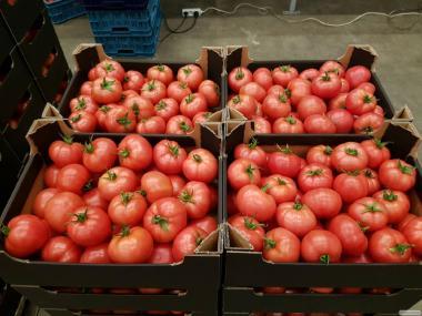 Świeży pomidor malinowy