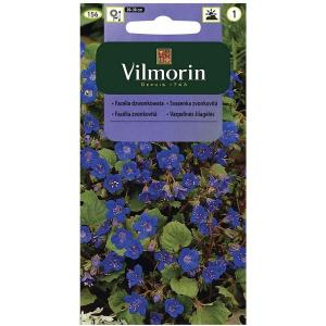 Facelia dzwonkowata niebieska VILMORIN