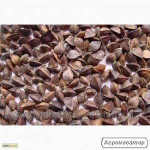 Nasiona gryki, karmen