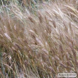 Nasiona jęczmienia ozimowego, devyatyy val