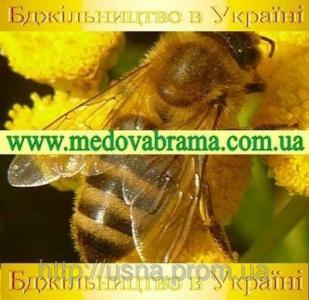 Encyklopedia ogrodnika