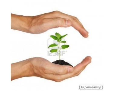 Środki do zaprawiania nasion