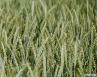 Sprzedam grunty rolne, 214 ha, Wielkopolska