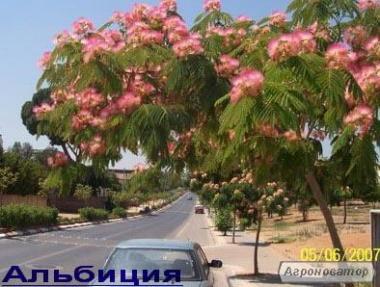 Rozsada kwiatów i ziół