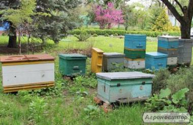 Rodziny pszczele  Polesska