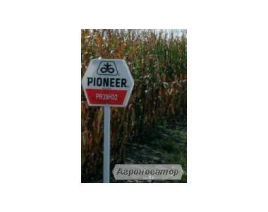 Nasiona kukurydzy, gibrid pr37n01